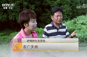 记丽水市梅峰茶叶公司总经理梅献山