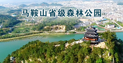 松阳县马鞍山省级森林公园